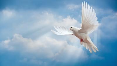 上海邦森分析关于乳鸽光吃不长的原因