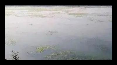 秋冬水产养殖