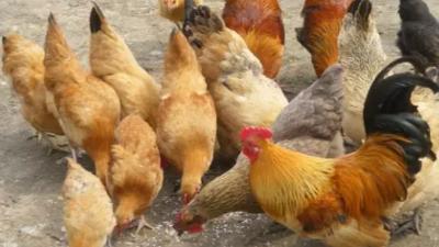 上海邦森肉禽系列产品展示