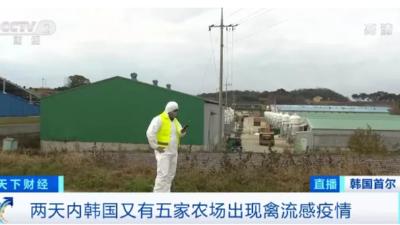 上海邦森分享央视报道:韩国禽流感肆虐