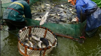 上海邦森提醒大家冬季水产养殖要注意这4点管理要点。
