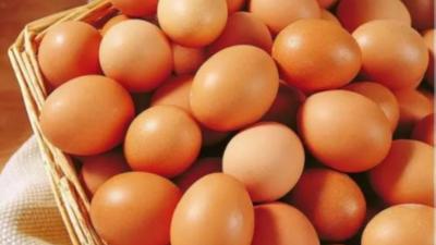 上海邦森蛋价行情分享