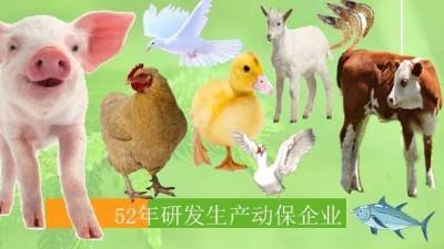 上海邦森分享养牛做好这几点才能赚钱