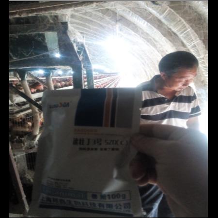 上海邦森速壮丁在蛋禽上的应用,看看淮北客户怎么评价